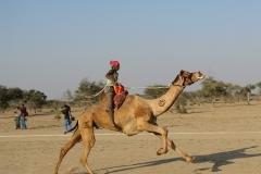 camel_festival_2