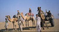 Camel Breeding Farm, Bikaner